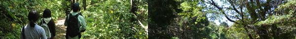 実習林での授業、キャンパス内の森の小径
