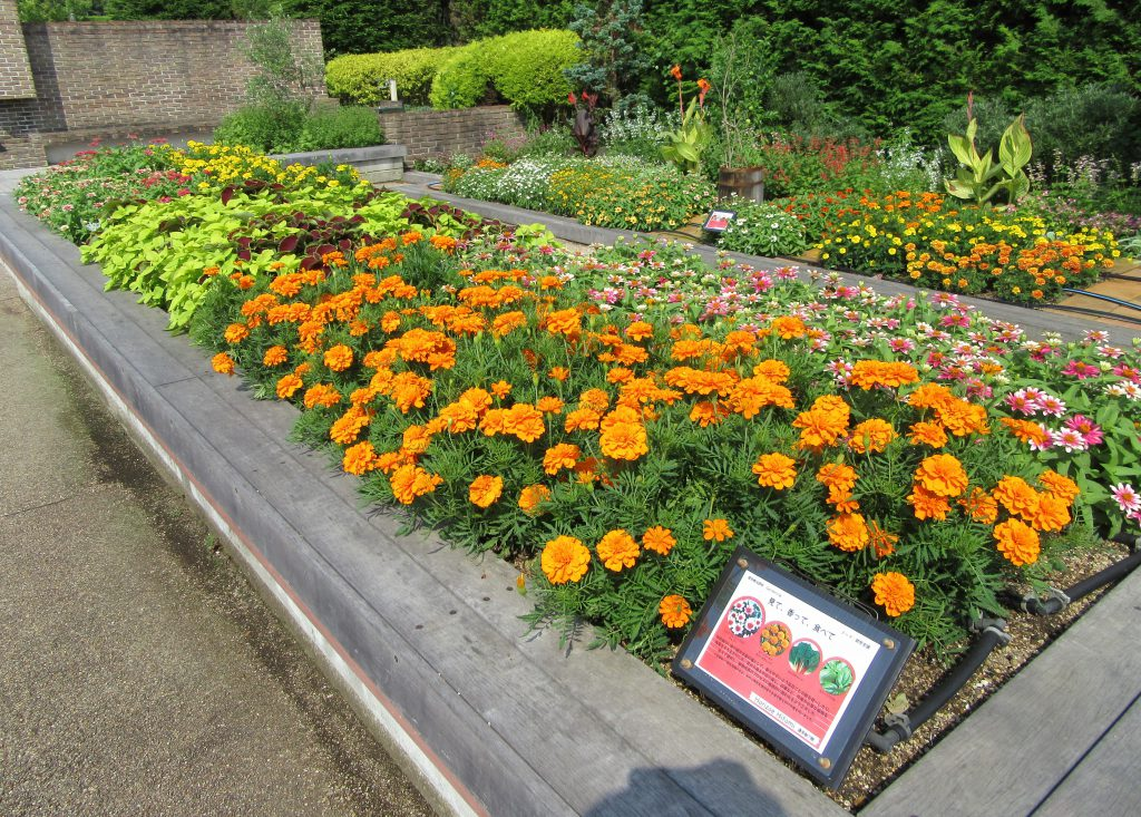 園芸療法花壇