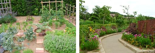 園芸療法ガーデン3